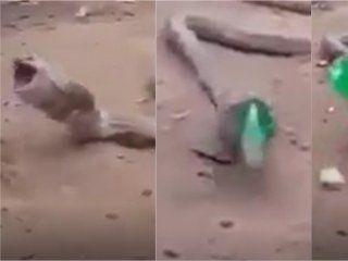 video: una cobra vomito una botella de plastico entera