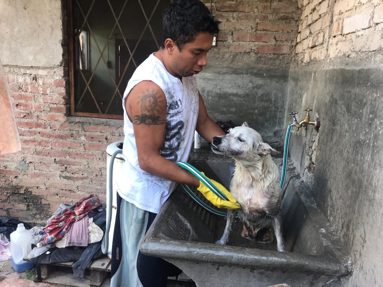 La conmovedora historia del joven desocupado que rescata perros discapacitados