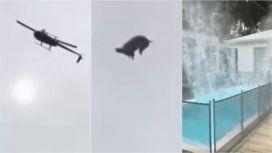 Tiraron un cerdo desde un helicóptero a una pileta en José Ignacio
