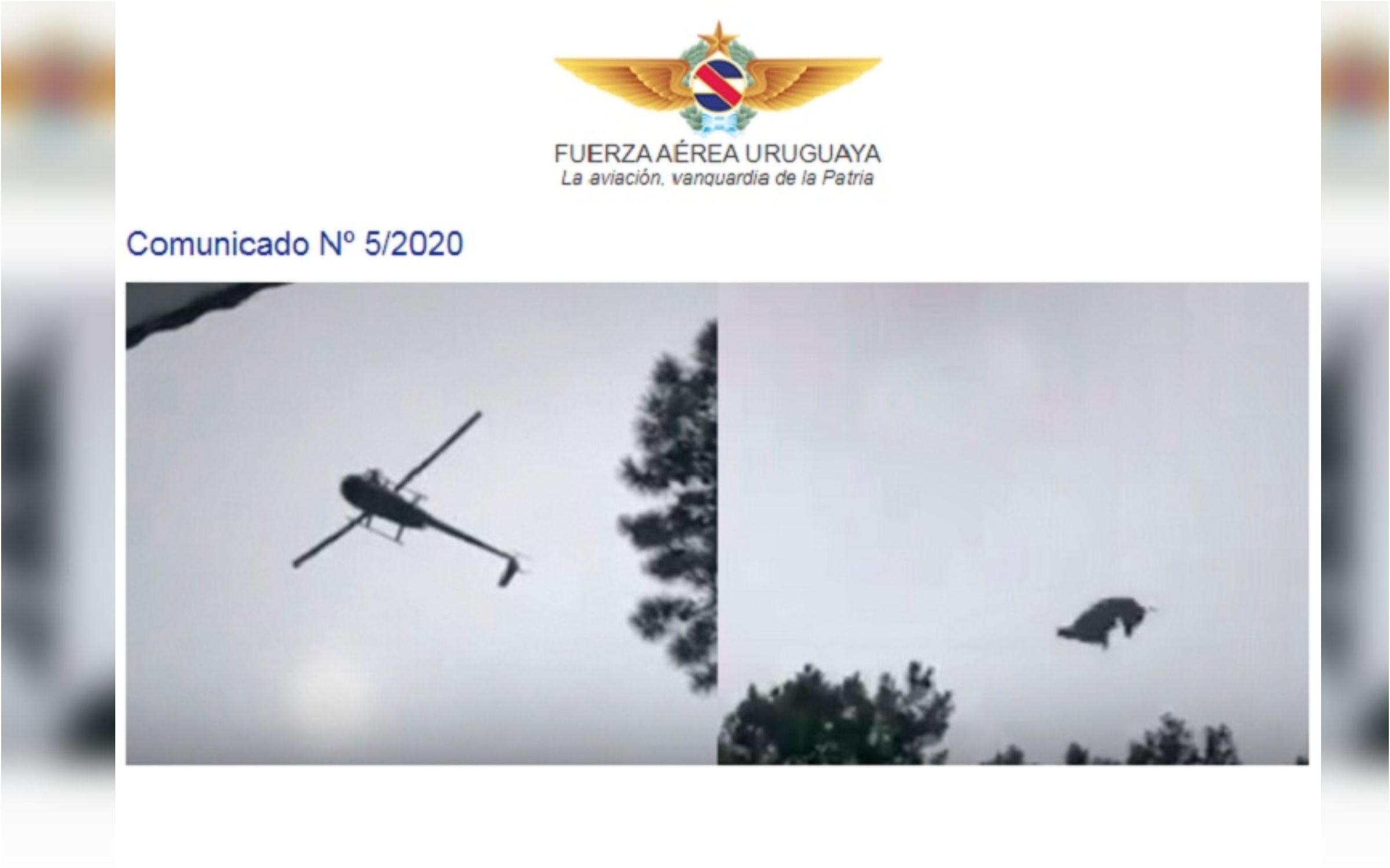 Video del chancho de Álvarez Castillo: la Fuerza Aérea Uruguaya está efectuando una investigación