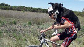 Ciclistas rescataron a un perro en plena carrera