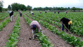 Trabajadores rurales recibirán el aumento de 4 mil pesos dispuesto por decreto