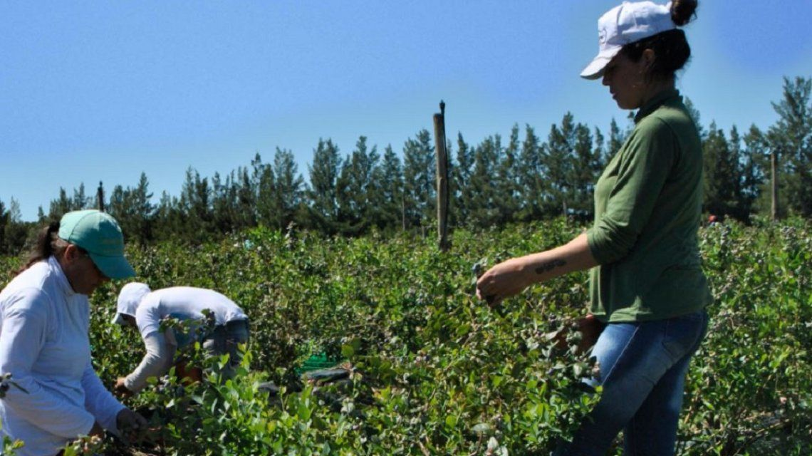 Según datos oficiales apenas el 17% de los trabajadores rurales está debidamente registrado