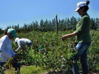 segun datos oficiales apenas el 17% de los trabajadores rurales esta debidamente registrado