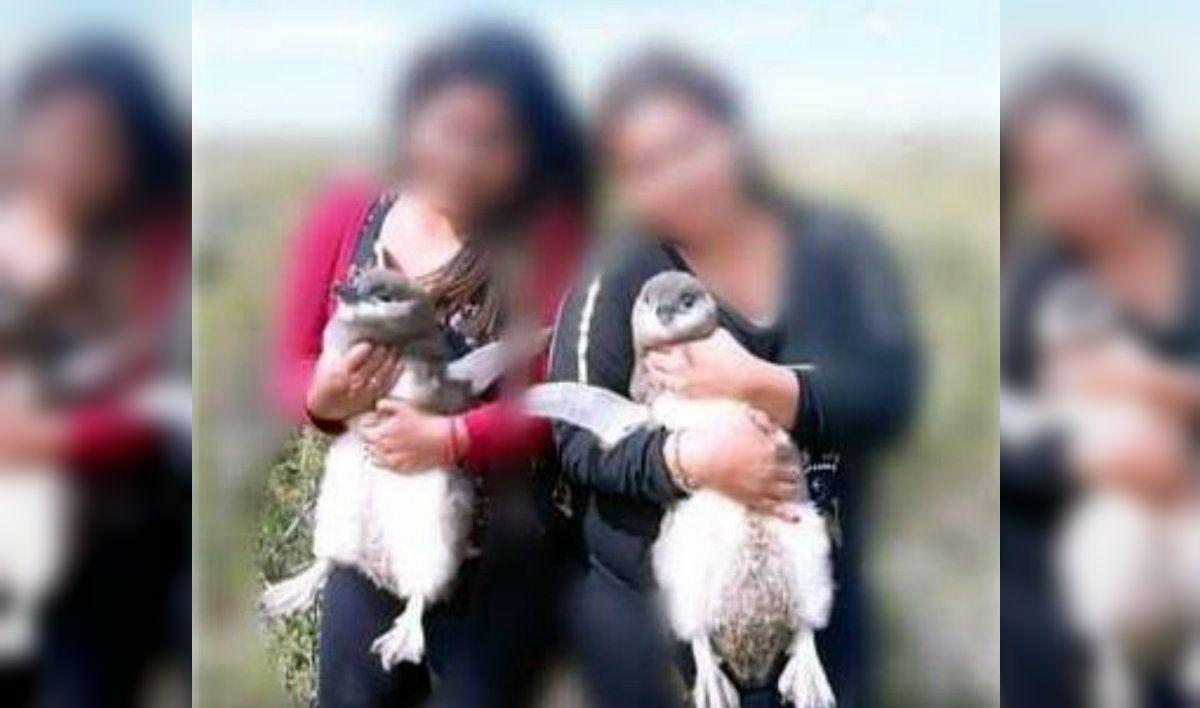 Se sacaron una foto con pingüinos en una reserva y el gobierno de Santa Cruz los demandará