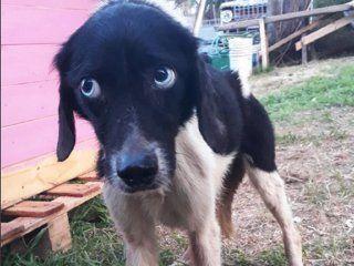 rescatan a 45 perros y 25 gatos de una casa de la plata: estaban desnutridos y en cautiverio
