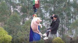 A lo Álvarez Castillo: indignación por un cerdo al que lanzaron en bungee jumping