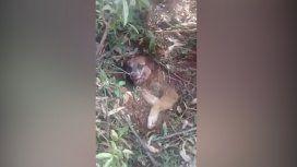 Crueldad pura: rescataron a un perro que fue enterrado vivo por sus dueños