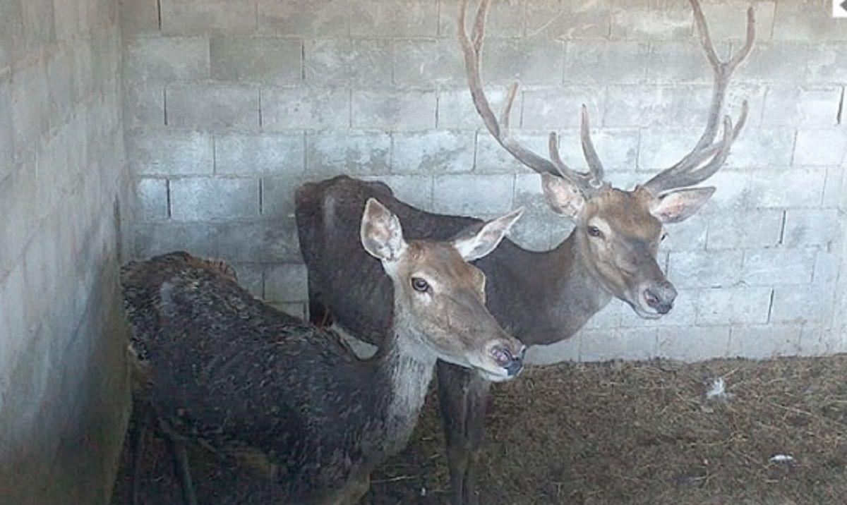 Rescataron animales silvestres maltratados en un centro terapéutico de Pilar