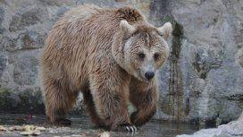 Liberarán a una familia de osos del zoológico de Córdoba: vivirán en un santuario de Arizona