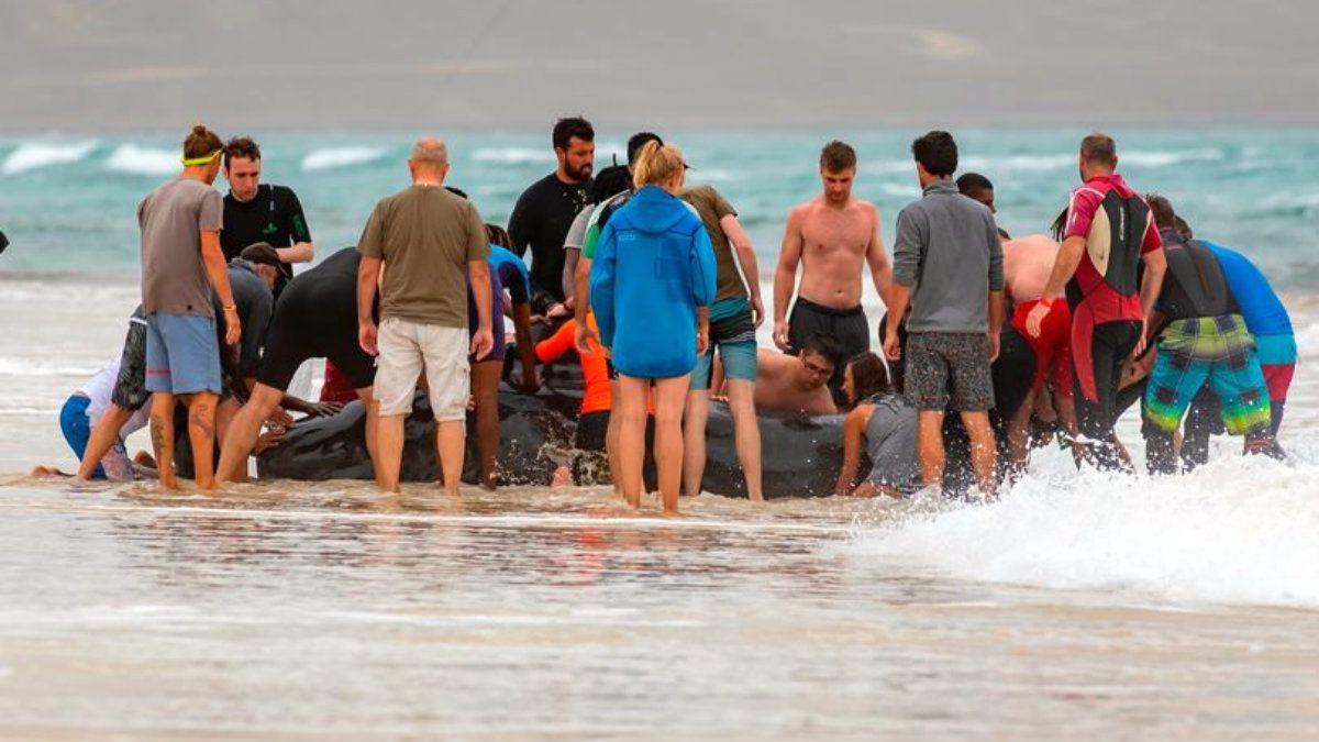Devolvieron a la ballena al mar con mucho esfuerzo