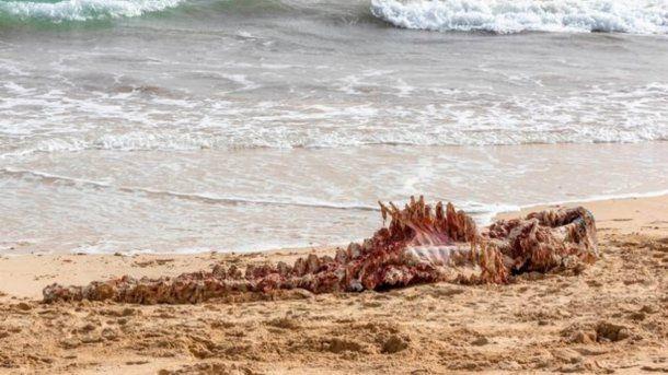 Pocos días después apareció un cadáver destripado en la playa