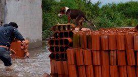 En medio de la inundación, resguardó a su perro en una pila de ladrillos