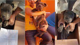 Su papá molía a golpes a su perrito y lo dejó en adopción en una veterinaria con una dolorosa carta