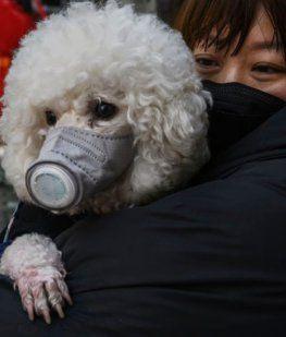 Un perro dio positivo de coronavirus en Hong Kong