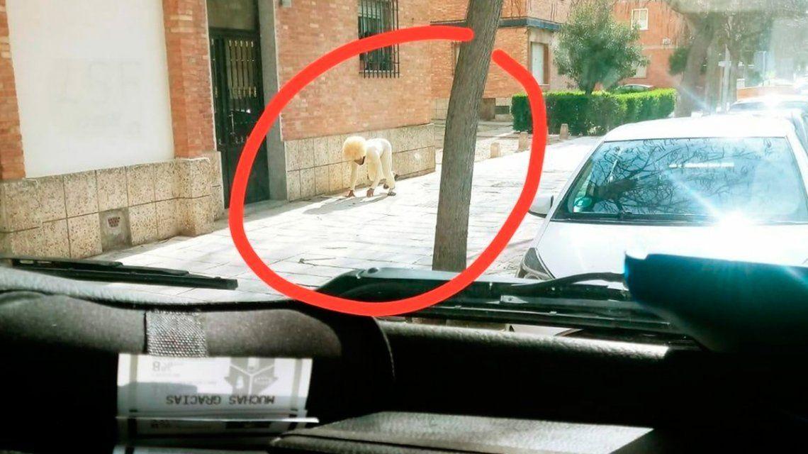 Violó la cuarentena por coronavirus en España disfrazado de perro