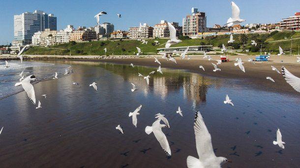 Lobos marinos y gaviotas disfrutan de las playas de una Mar del Plata vacía. FUENTE Clarin (C) digital, Abril 29,2020