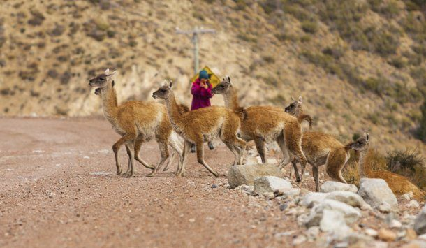 Esquel: los animales aprovecharon la falta de turistas por la cuarentena