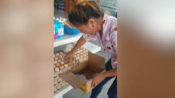 Viral: el nacimiento de un pollito en un maple de huevos sorprendió a todos en un mercado de Tailandia
