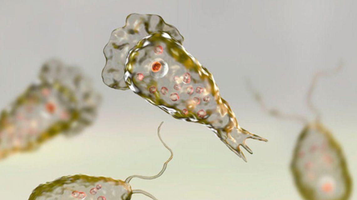 Estados Unidos: preocupación por otra muerte a causa de la ameba come cerebros