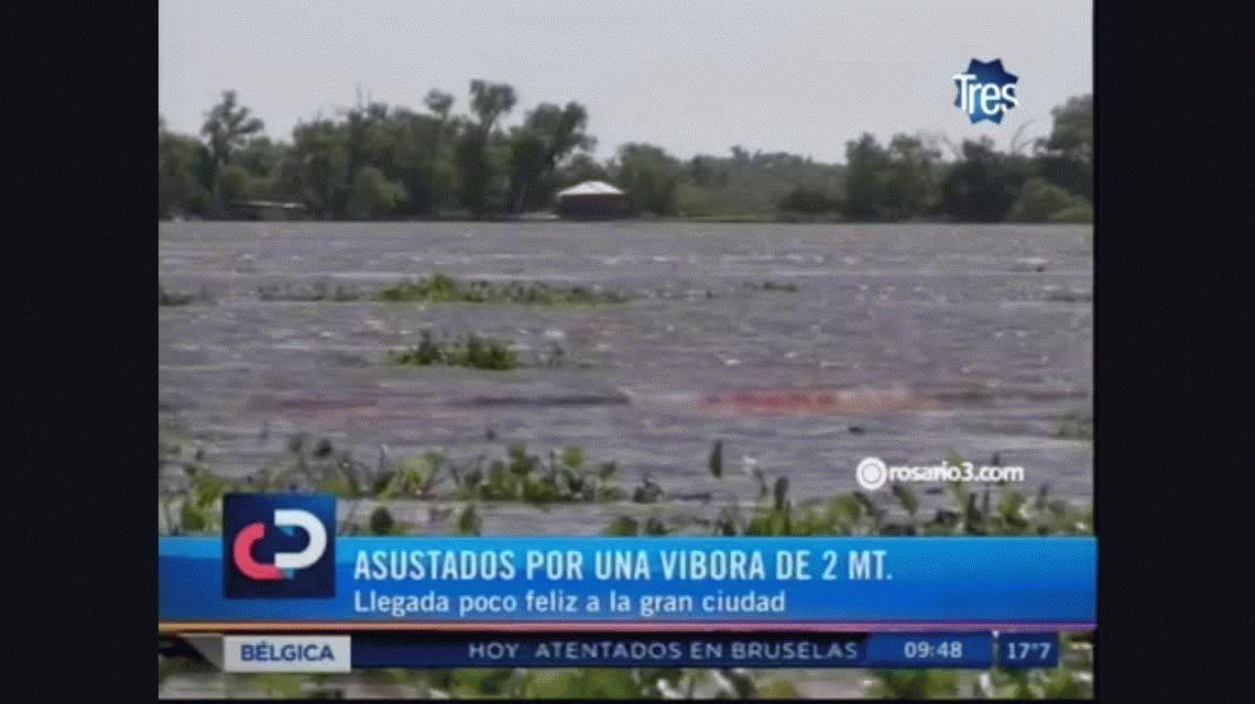 VIDEO: Mirá la serpiente de un metro y medio que causó pánico en Rosario