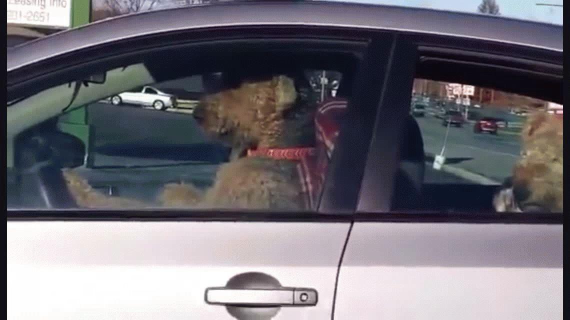 Fue a hacer unos mandados, dejó a los perros en el auto y mirá lo que pasó