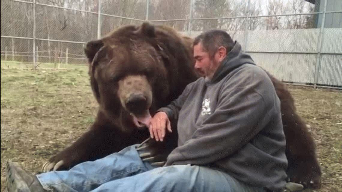 Abrazo del oso: este cuidador casi se lleva un recuerdo de su amigo peludo