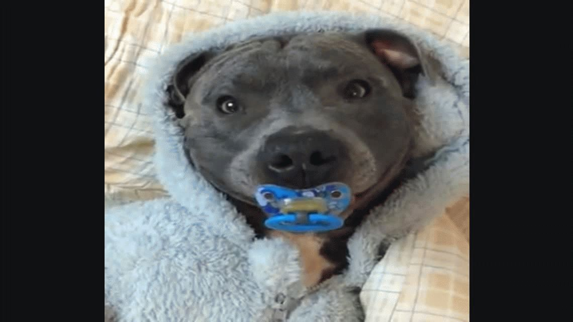 Pura ternura: perro sonríe cuando le dan un chupete