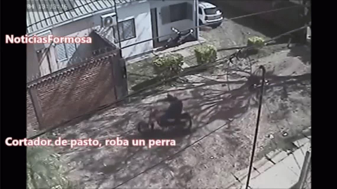 VIDEO: robaron una perra, fueron escrachados y terminaron presos