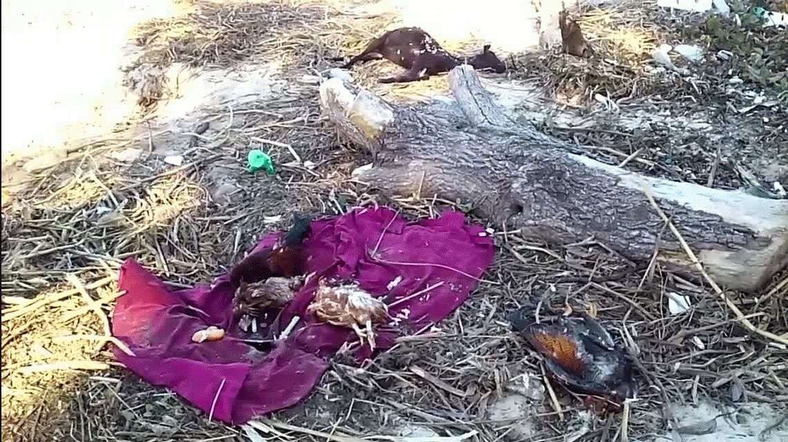 Macabro ritual en plena costanera: así sacrificaron cuatro aves y una cabra