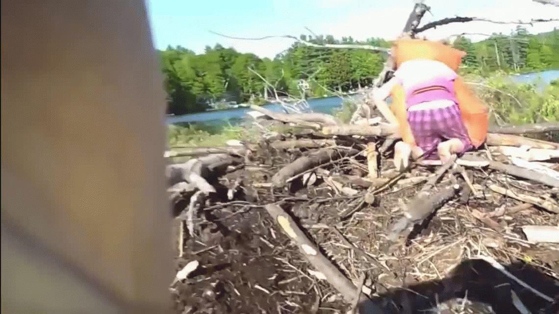 VIDEO: una nena aventurera agarra sin miedo a una víbora