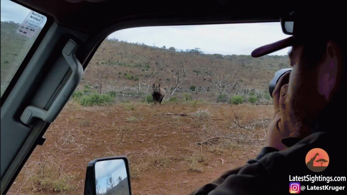 VIDEO: La tierna reacción de un rinoceronte bebé al recibir su primer baño