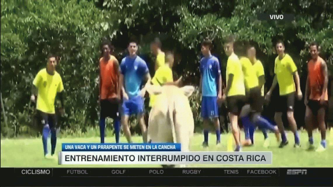 Insólito: una vaca irrumpió en una práctica y ¡corrió a los jugadores!
