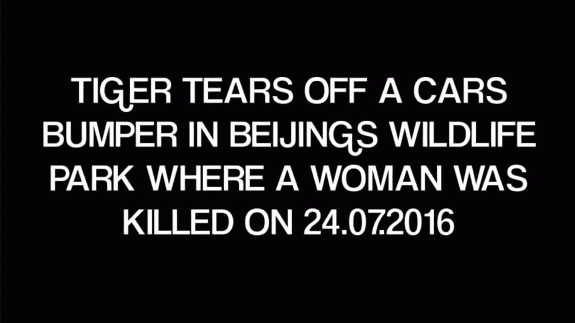 Otro ataque de un tigre en el mismo zoológico chino de Beijing: esta vez la sacaron barata