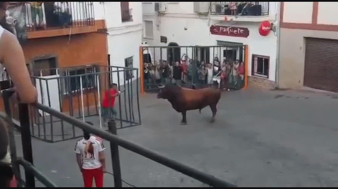 Impactante: Provocó a un toro desde una jaula y el animal casi lo mata