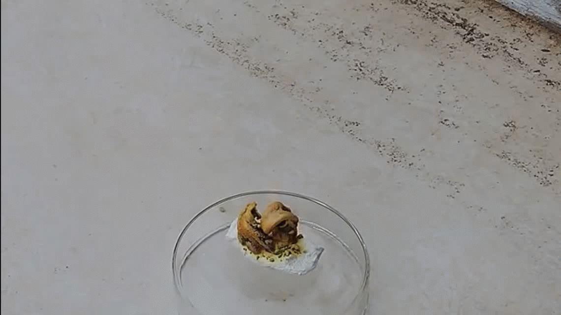 VIDEO: Espectacular experimento hace aparecer una víbora de la nada