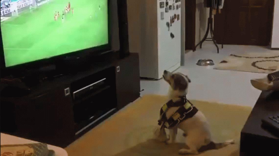 VIDEO: Mirá al perro fanático que grita los goles de su equipo
