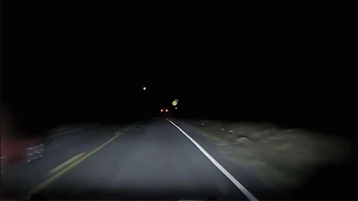 VIDEO: Un ciervo quiere meterse dentro de una camioneta en la ruta