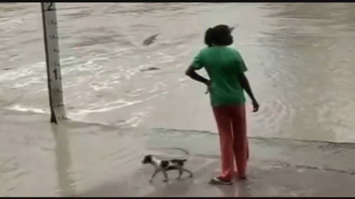 La mujer espantó a los cocodrilos con una ojota
