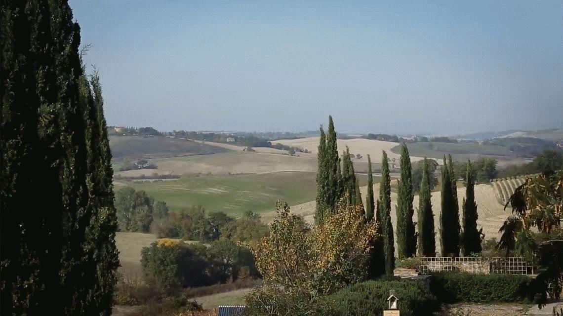 Un productor italiano mejoró la calidad de sus uvas con la música de Mozart
