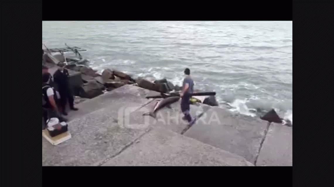 Mar del Plata: un tiburón apareció en la costa de Playa Grande
