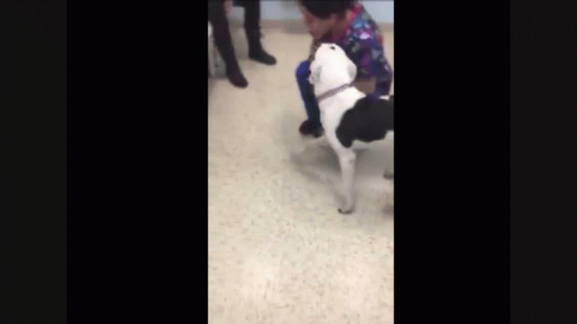 VIDEO: Un perro y un gato sobreviven tras meses de encierro en un departamento
