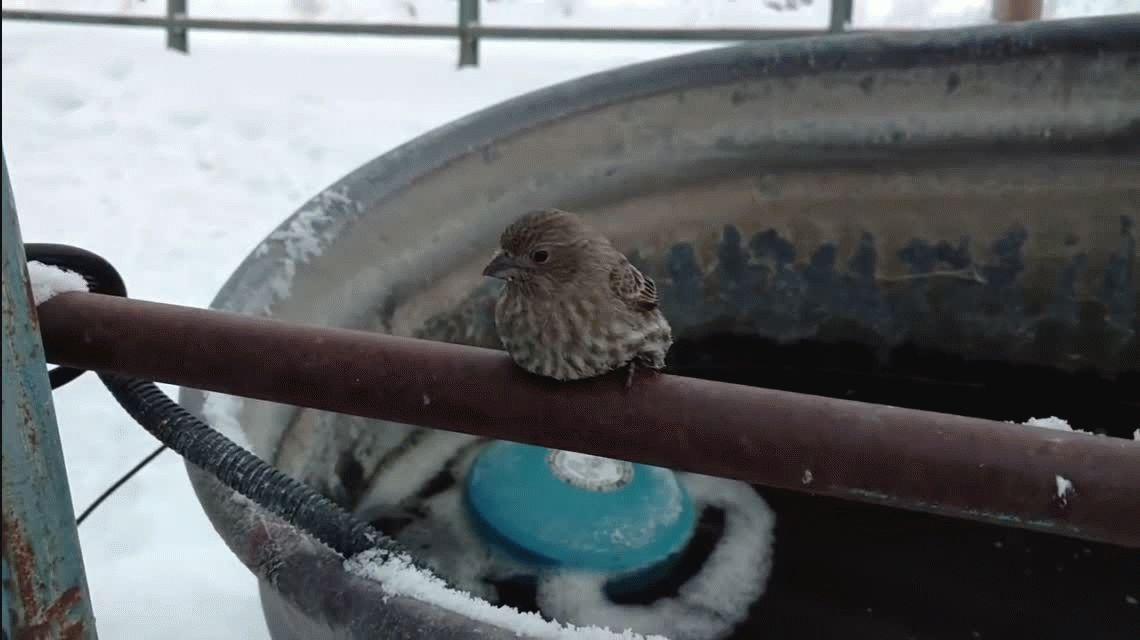 Conmovedor: encontró un pájaro congelado y lo salvó con su aliento