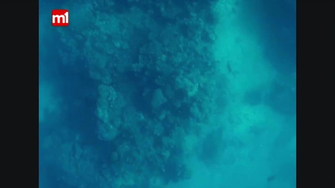 Aterrador: el sorpresivo ataque de un tiburón a un pescador en Australia
