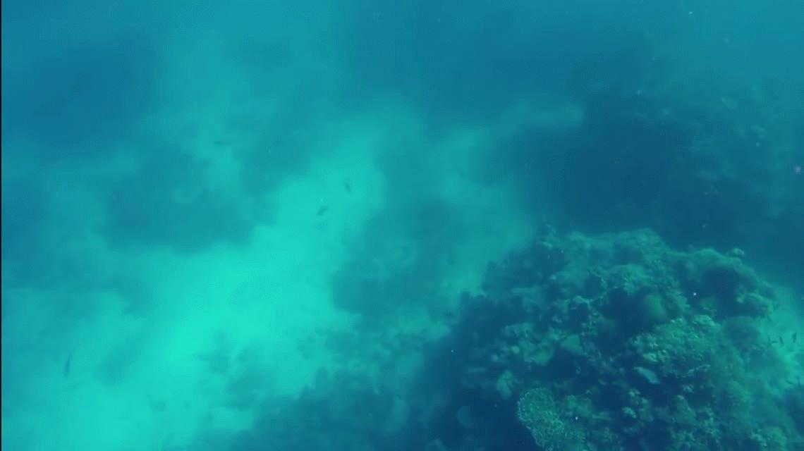 Se salvó de milagro: así se escapó un buceador de un tiburón asesino