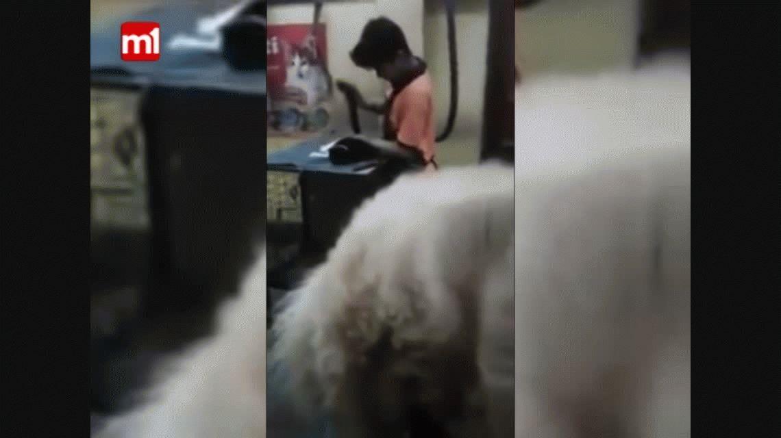 Indignante: filman a empleado de una veterinaria golpeando a los animales