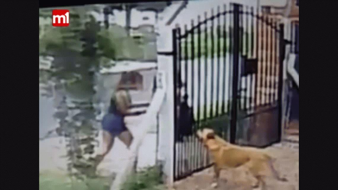 VIDEO: Así dos chicas robaron a un perro del patio de una casa
