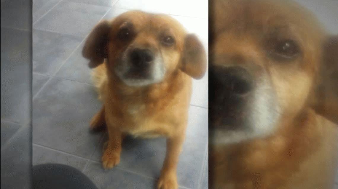 Tras la muerte de Chocolate, degollaron y abandonaron a otro perro en Córdoba