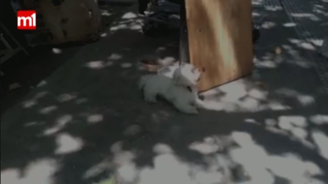 Quilmes: Le robaron el perro y descubrió que lo vendían en la estación de tren