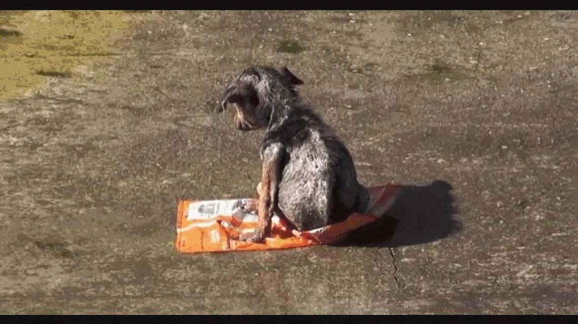 VIDEO: La espectacular recuperación de un perrito abandonado en un río de Los Angeles